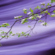 Dogwoods on Silk by Robin Black